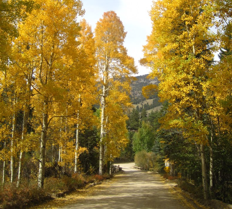 Best Time For Fall Foliage Viewing In Colorado