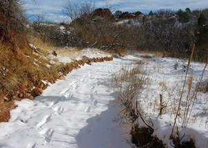 Snowy Creek Bed
