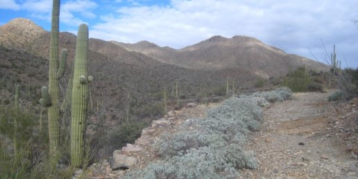 Kings Canyon Trail in Tucson